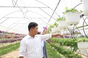Huyện Hòa Vang: Phát triển nông nghiệp công nghệ cao