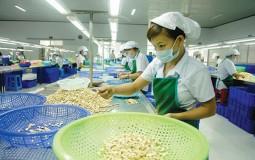 Hạt điều Việt Nam: Cần lắm một đầu tàu!