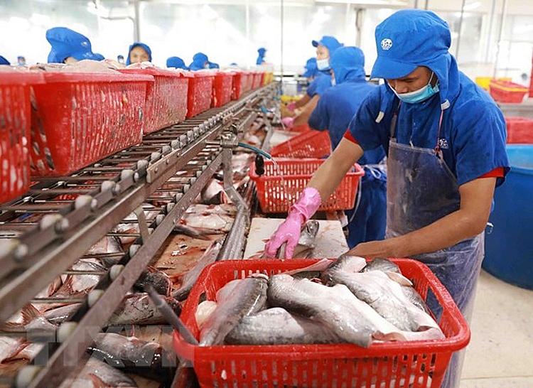 Giao thương khởi sắc, xuất khẩu cá tra của Việt Nam từng bước phục hồ