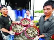 Xuất khẩu nông, thủy sản: Bước tiến vượt bậc trong 10 năm qua