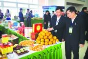 Hà Giang: Nức tiếng đặc sản cam sành