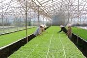 Đề xuất chính sách về sản xuất nông nghiệp hữu cơ