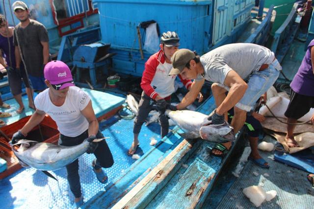 Thời gian gần đây, các tàu khai thác cá ngừ đại dương ở Khánh Hòa đều lâm vào cảnh thua lỗ