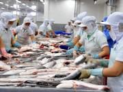 Xuất khẩu cá tra sang Hoa Kỳ vẫn ổn định sau khi bị thanh tra