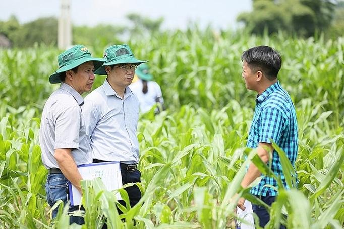 Nhiều chuyên gia quốc tế tới Việt Nam tìm hiểu giải pháp phòng trừ sâu keo mùa thu hiệu quả - Ảnh 2