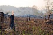 Tây Nguyên: Vẫn thất thoát rừng
