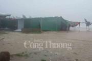 Bão số 10 gây thiệt hại lớn tại Nghệ An