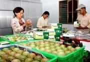 Trái cây Việt khó xuất ngoại vì cước phí cao