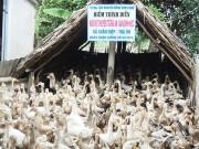Tiềm năng xuất khẩu trứng vịt muối