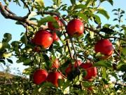 Cây táo và tầm nhìn