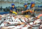 Xuất khẩu cá tra gặp khó ở thị trường lớn