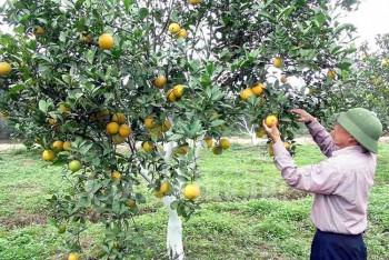 nghe an se dan tem dien tu cho 550 nghin qua cam trong nam 2017
