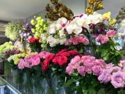 gia hoa tuoi tang manh dip 2010