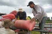 Giải pháp xuất khẩu gạo bền vững: Thúc đẩy liên kết, nâng cao giá trị