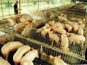 Đề xuất xây dựng Luật Chăn nuôi