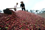 Nâng chất, tăng giá trị cà phê Việt