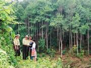 Phân loại rừng sản xuất để quản lý hiệu quả