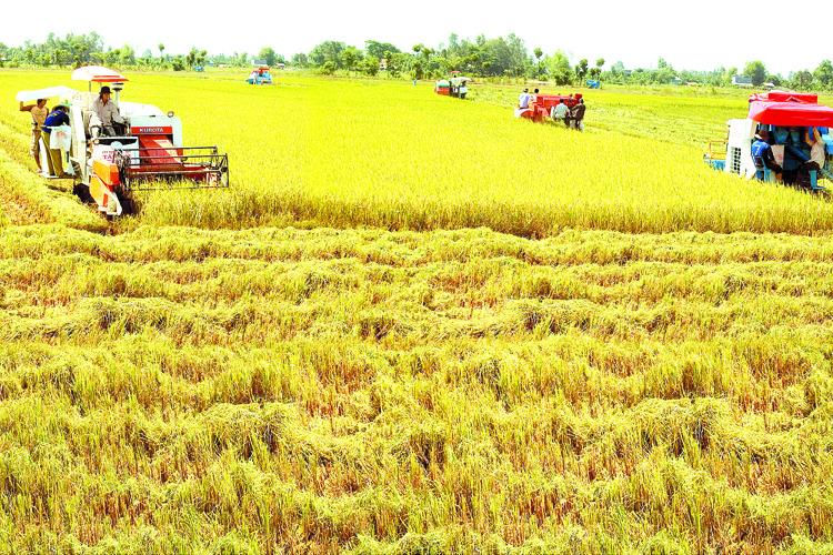 Xây dựng thương hiệu gạo Việt: Nâng cao giá trị xuất khẩu