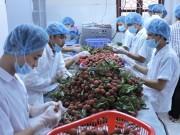 Hướng tới xuất khẩu trái cây bền vững