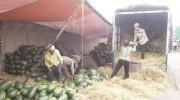 Rau quả Việt có thể tăng xuất khẩu gấp 5, gấp 10 lần