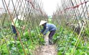 Phân loại và đánh giá hợp tác xã nông nghiệp