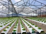 Nông nghiệp công nghệ cao - Hy vọng mới