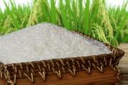 Gạo Việt được vinh danh