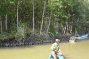 Vì màu xanh của rừng