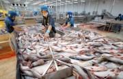 Hoa Kỳ kết luận sơ bộ đợt rà soát hành chính thuế CBPG lần thứ 13 đối với cá tra  basa Việt Nam