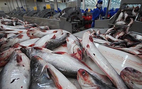 Hoa Kỳ giảm mạnh thuế cho cá tra – basa Việt Nam