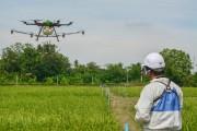 Bayer hợp tác với IRRI thúc đẩy công nghệ Gieo sạ tại châu Á