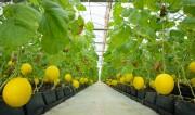 IFC đầu tư vào lĩnh vực giống cây trồng của Việt Nam
