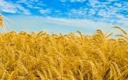 Giá trị nhập khẩu thực phẩm toàn cầu trên đà tăng trưởng