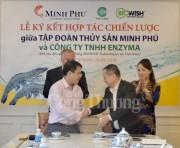 Minh Phú và ENZYMA: Hợp tác để nâng tầm giá trị con tôm Việt