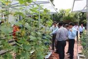 Giải pháp ứng dụng công nghệ cao trong sản xuất nông nghiệp đô thị