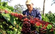 Ngày cà phê Việt Nam lần thứ nhất năm 2017