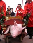 """Không khuyến khích lễ hội """"man rợ""""  như lễ hội chém lợn"""