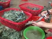 Hà Nội: Phát hiện cơ sở bơm tạp chất vào tôm chết để tăng trọng