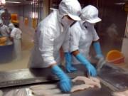 Xuất khẩu cá tra năm 2015 khó bứt phá