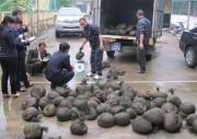 Công nghệ hỗ trợ chống buôn lậu động vật hoang dã tại Việt Nam