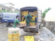 Quảng Ninh bắt giữ trên 15.000 con gà giống nhập lậu từ Trung Quốc