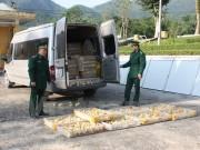 Quảng Ninh: Bắt và tiêu hủy 15.000 con gà con nhập lậu