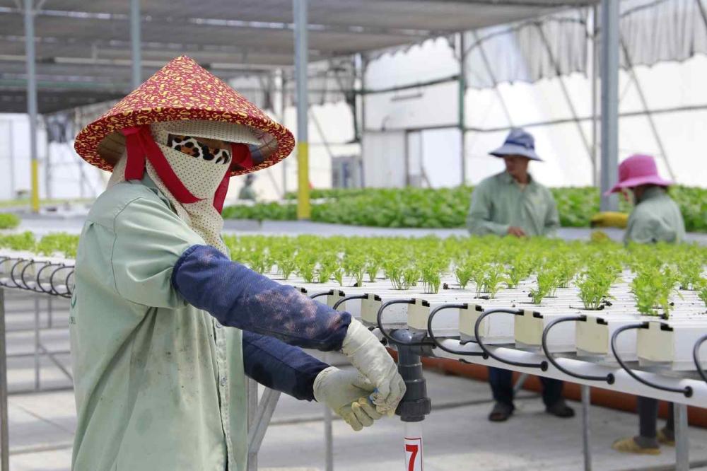 Israel - ASEAN: Cơ hội hợp tác trong lĩnh vực công nghệ nông nghiệp