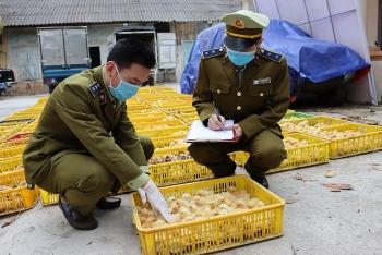 Lạng Sơn: Thu giữ 30.000 con giống gia cầm không rõ nguồn gốc
