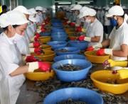 Nhiều triển vọng xuất khẩu tôm sang Hàn Quốc