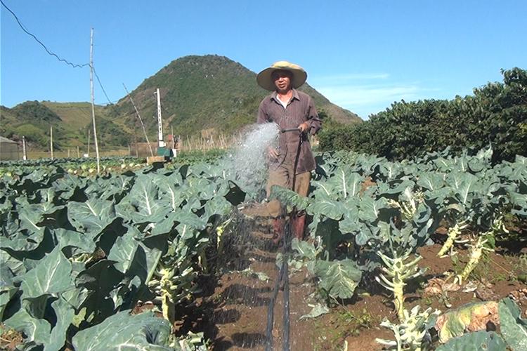Sơn La: Phát triển nông nghiệp an toàn – hướng đi bền vững