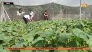 Nông nghiệp Thái Nguyên ứng dụng KHCN gia tăng năng suất chất lượng