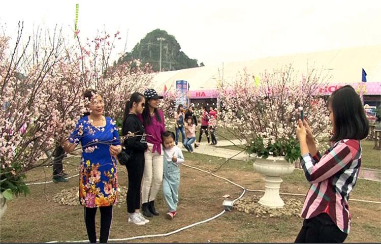 Khai mạc Lễ hội hoa Anh đào - Mai vàng Yên Tử, Hạ Long 2017