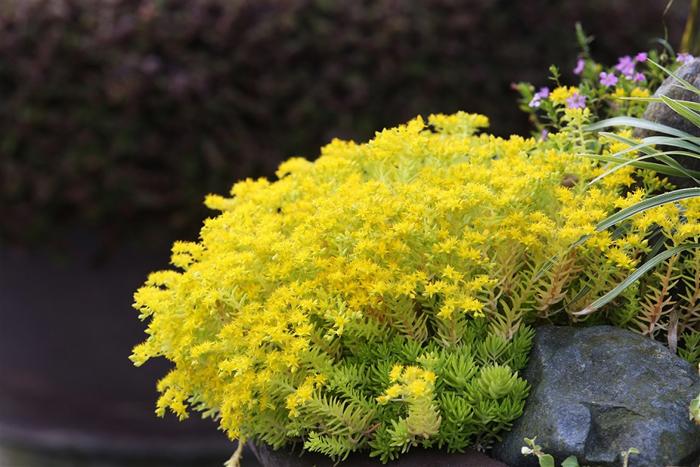 Sun World Ba Na Hills - bốn mùa rực rỡ sắc hoa