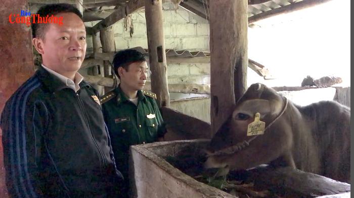 Bà con dân tộc Hà Giang thoát nghèo nhờ bò giống